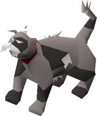 Lazy cat (white and black) pet