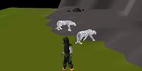 Big Cats & WWF