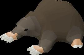 Baby mole pet