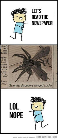 File:Funny-flying-spider-wings.jpg