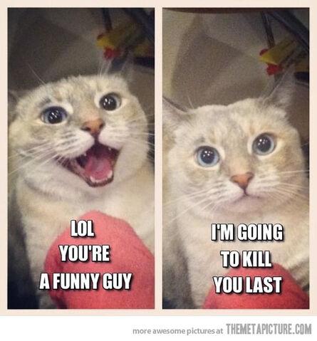 File:Funny-cat-laughing-evil.jpg