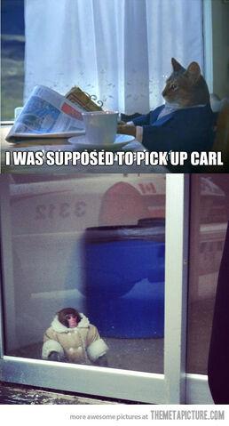 File:Funny-cat-monkey-contemplative.jpg