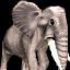 ElephantAOMicon