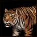 TigerAoM icon