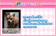 Aisuma app 17