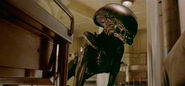 Alien-3dogalieninfarmary