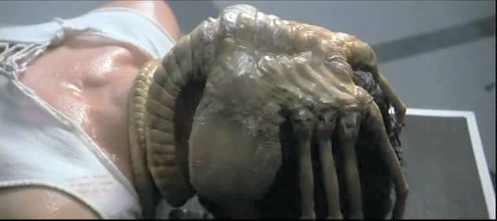 http://vignette3.wikia.nocookie.net/aliens/images/9/94/Alien_facehugger.jpg/revision/latest?cb=20080210191233