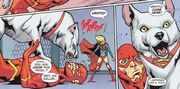Supergirl's Dog