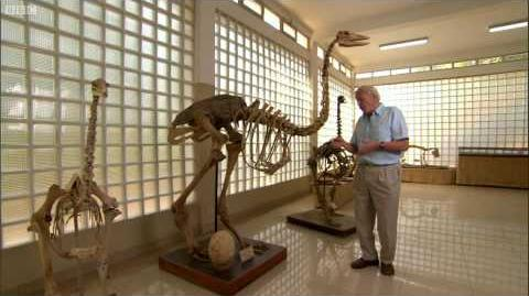 How tall was the Elephant Bird? - AttenboroughWeek - Attenborough and the Giant Egg - BBC-1426535350