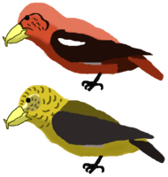 Holsaeter's Crossbills