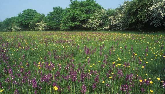 File:Grassland pic.jpg