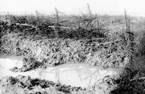 Barbed wire at Beaumont Hamel SOMME