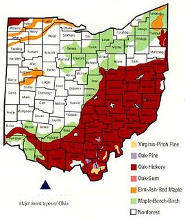 Ohio Forrest