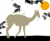 Vicuna of the East
