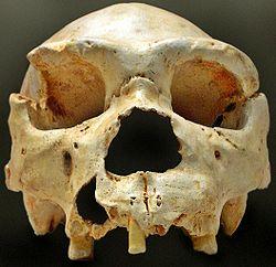 250px-Homo heidelbergensis-Cranium -5