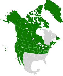 AMP Map of the United States of America VIV