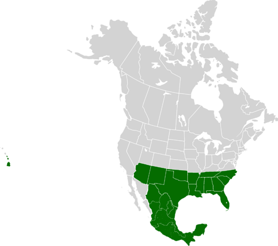 File:Location of the Confederate States of America (A.M.P).png