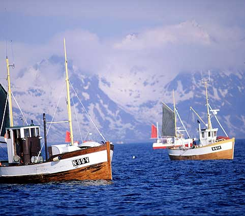 File:Norwegian fishing boats.jpg