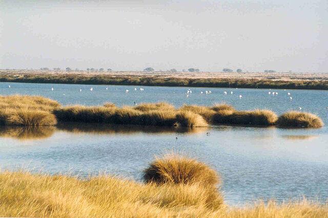File:800px-Wetlands in Donana.jpg