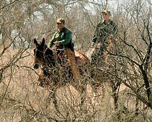 Horsebackverdigris