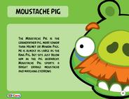 Moustache Pig Toy Care