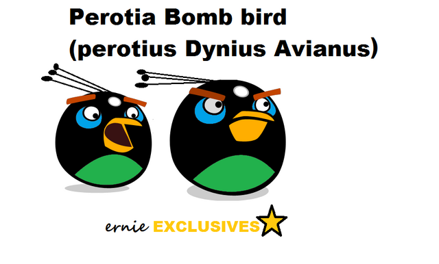 File:Perotia Bomb Bird of Paradise EXCLUSIVE.png