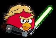 Luke bird