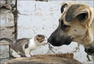 File:Cat kiss dog.jpg