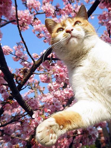sun's cool cats Latest?cb=20160910142522
