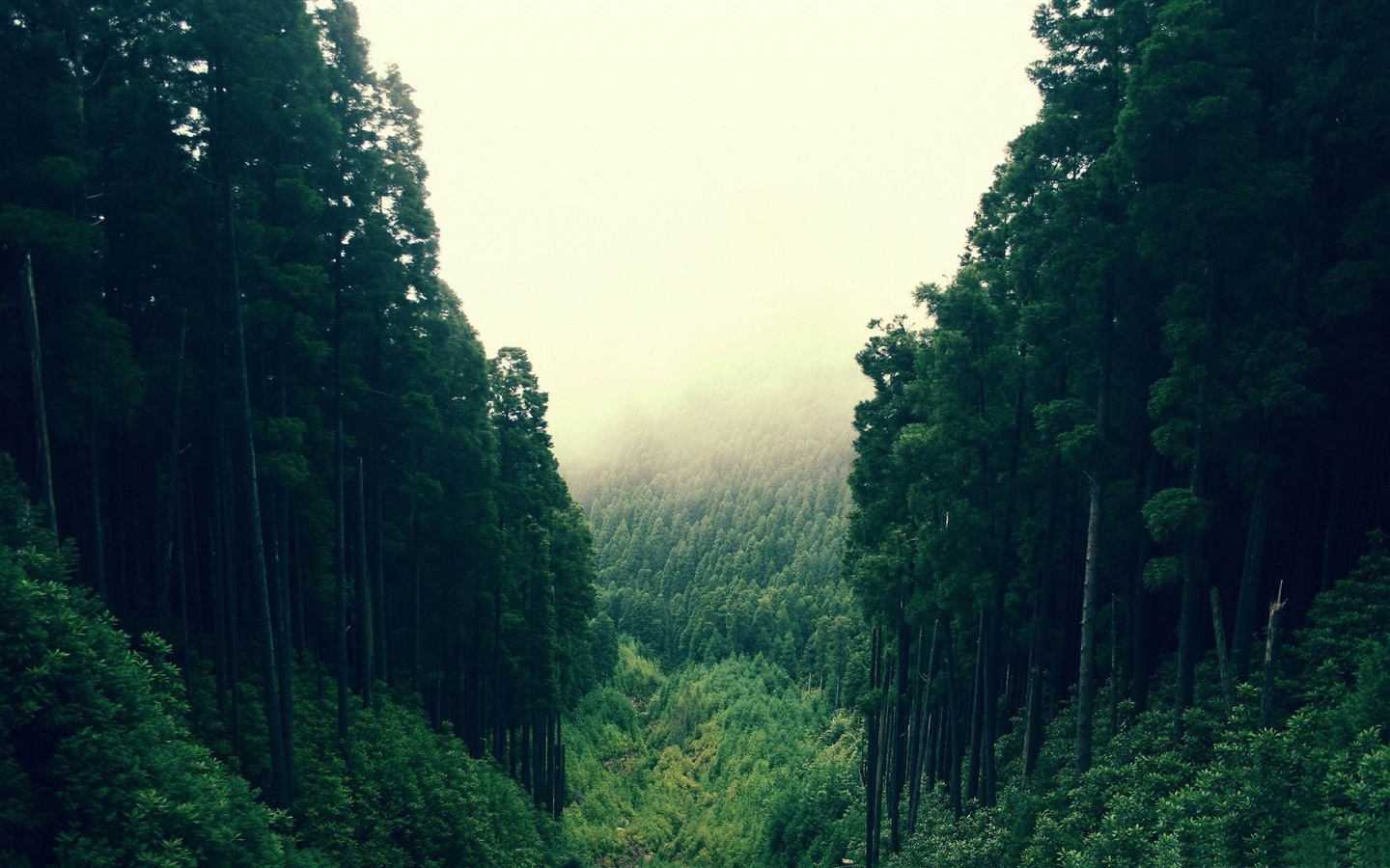 Image - Tumblr-theme-background-forest-mountain-forest ...