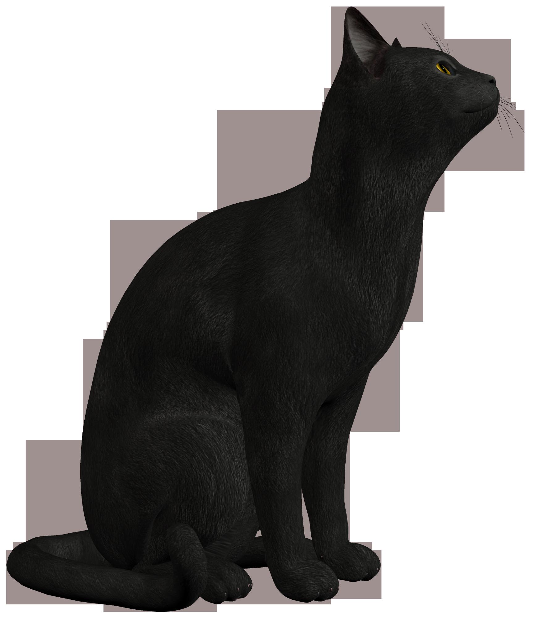 Neutral Blue Image Black Cat Png Clipart 552 Png Animal Jam Clans