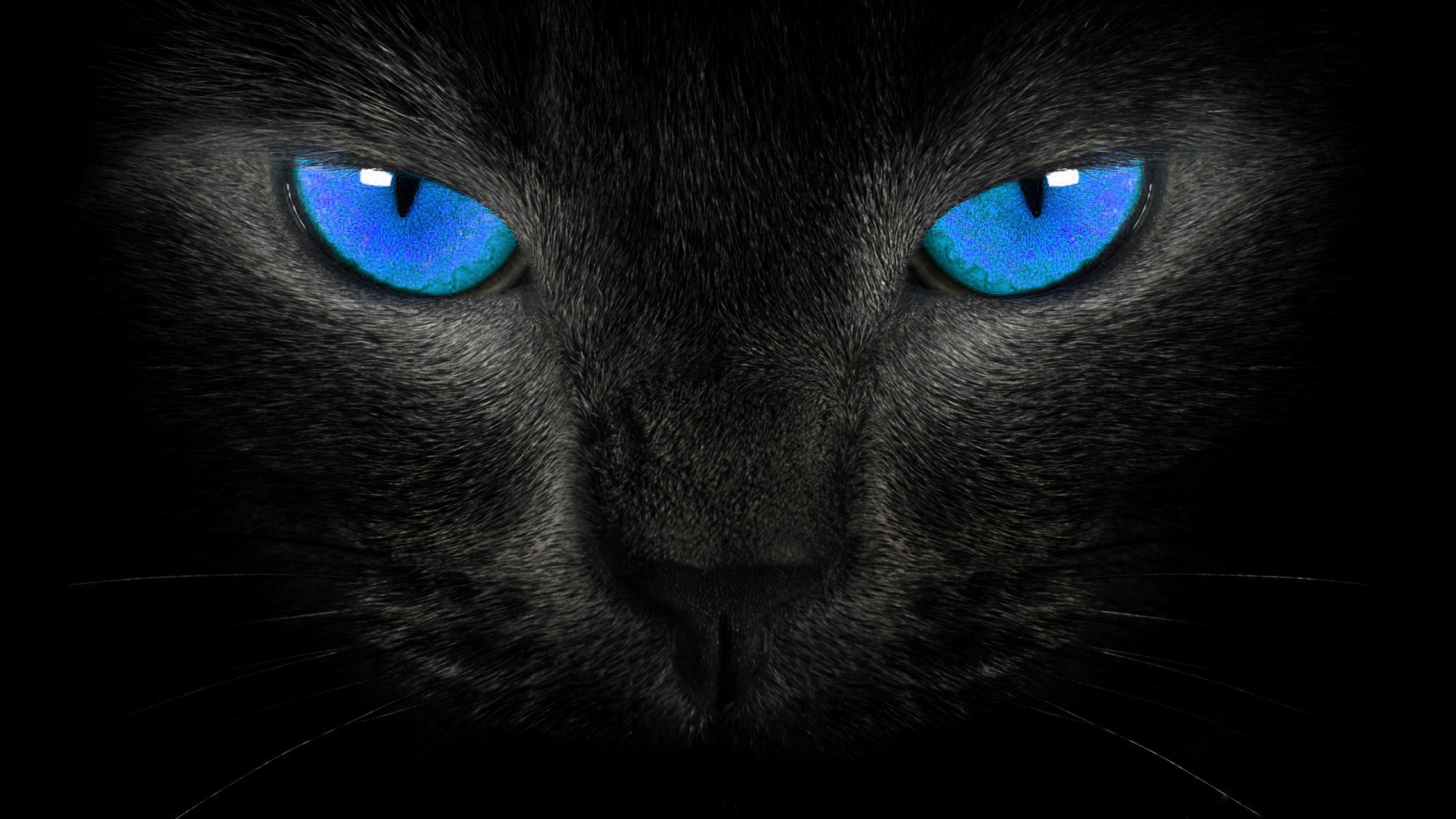 image - hd-wallpapers-blackblue-wallpaper-black-cat-blue-eyes