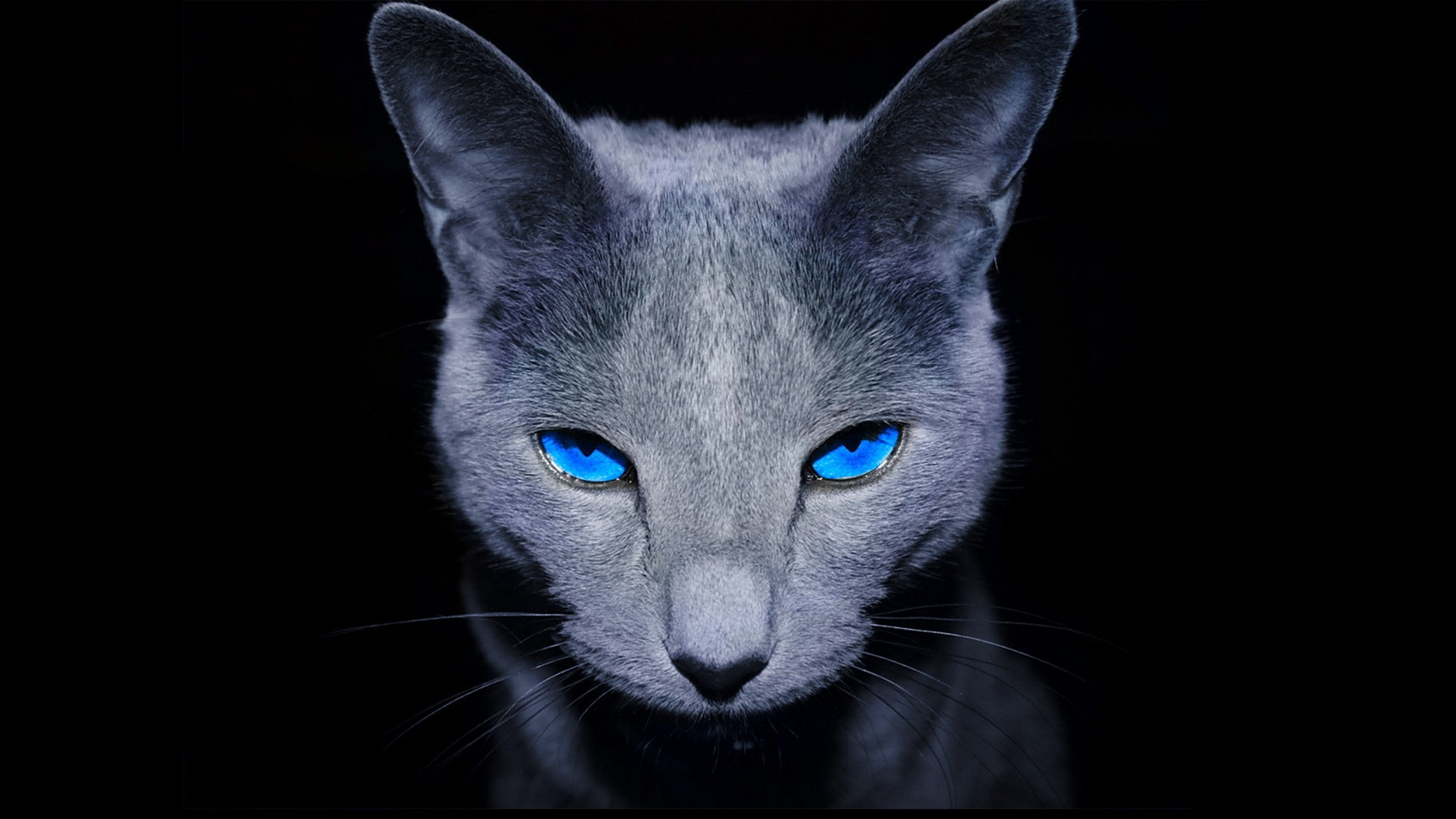 Image Black animal wallpaper with dark gray cat with blue eyes