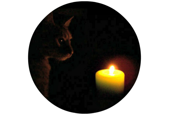 Catcandle