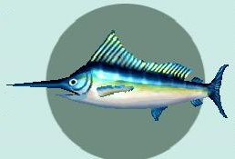 File:Bluemarlin.jpg
