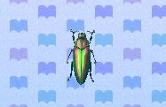 File:Jewel beetle encyclopedia (New Leaf).jpg