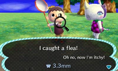 File:Catching Fleas From Rhonda.jpg