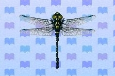 File:Petaltail dragonfly encyclopedia (New Leaf).jpg