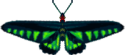 File:Raja Brooke Butterfly (City Folk texture alt).png