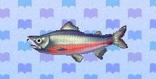 File:Salmon encyclopedia (New Leaf).jpg