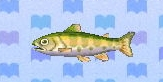 Cherry salmon encyclopedia (New Leaf)