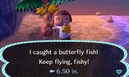 ButterflyFish2
