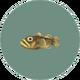 Freshwater Goby (City Folk)