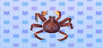 File:Redkingcrabpicture.jpg
