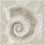 File:Ammonite.png