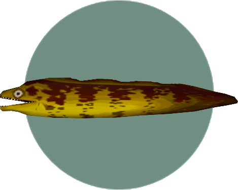 File:Moray Eel (City Folk).png