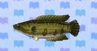 Giant snakehead encyclopedia (New Leaf)
