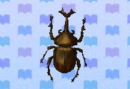 Horned dynastid encyclopedia (New Leaf)