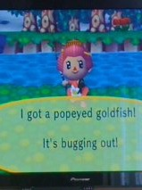 File:Popeyed goldfish!.jpeg