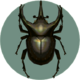 Atlas Beetle (City Folk)